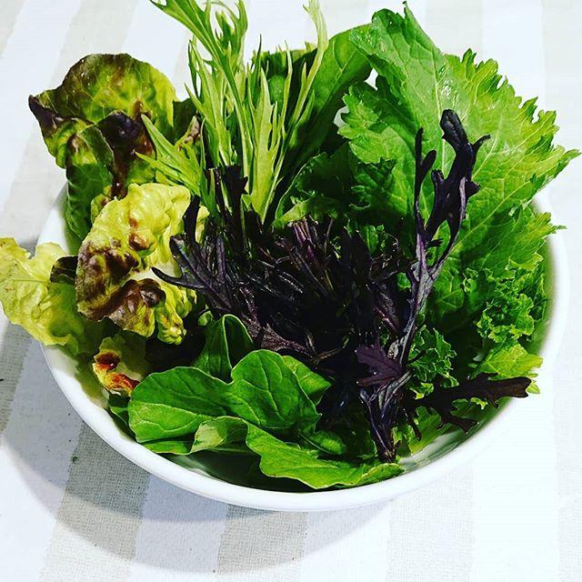 新鮮は野菜が立つ️寄せ植えのようですが、サラダですルッコラ、みず菜、からし菜など地元の採れたて野菜達 素材の味を楽しみたいから シンプルに塩、酢、オリーブオイルで頂きますスッキリとしていて、元気が出る身体に負担が少なく手の先まで通る軽やかさ弾ける苦味の中にある甘味食レポとしては、伝わりにくい表現ですが間違いなく美味しい🥰食物の味だけではなく身体に染みる感じも解って欲しい身体は食べ物で出来ている#埼玉 #上尾 #薬膳 #地産地消 #新鮮野菜 #元気#あおぞら農園 #伊奈 (Instagram)